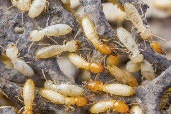 Tucson Pest Control
