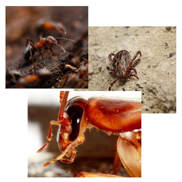 Tucson Pest Management